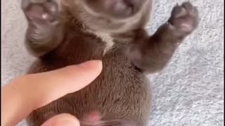 Puppy laughing