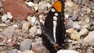 Lovely butterfly 01