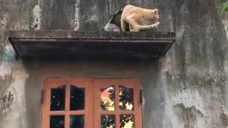 """""""The Hero Cat saves the Beauty one from upwindow"""""""