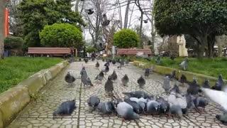 Pigeon taking break