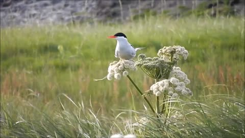Seagull Bird Spotted Standing On Flower