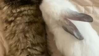 love story between a cute cat and a cute rabbit