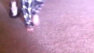 Black dog getting dragged on carpet