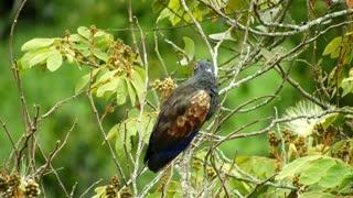 Black Eye Bird Captures Forest Movements