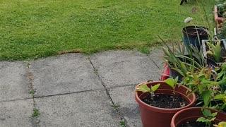 Sneaky Kitty Waits for Backyard Ambush