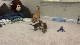 Wary Dog Isn't Used to Kittens Yet