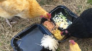 Chicken taco feast