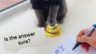 Lovley Smart Black Cat