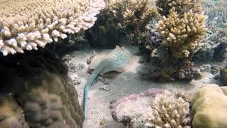 Creatures Underwater 1
