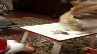 A dog steals cat food