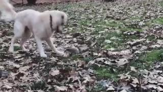 Dog has precious reaction when introduced to pet hedgehog