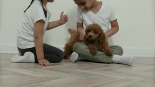 Two children playing with a little dog
