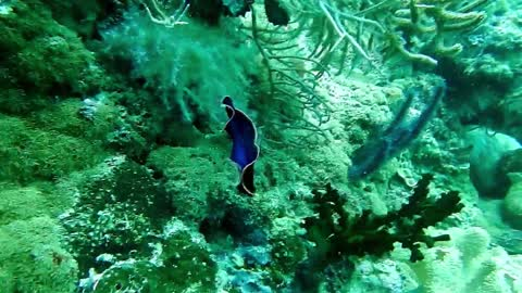 Blue And Gold Sea Creature
