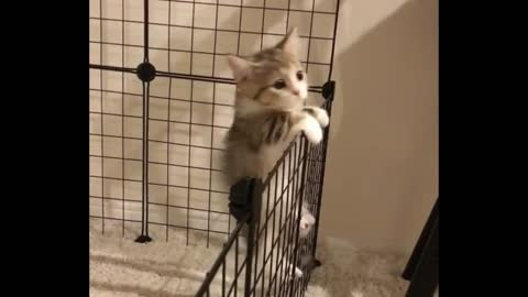 Kiki is trying to climb the iron grid and fail in it