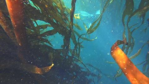 Freediving Big Sur California - Monterey Co.