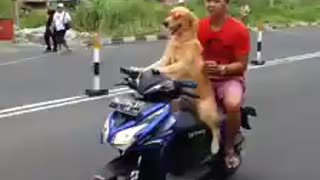 Dog giving ride