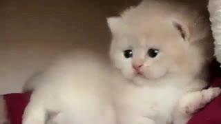 amazing little kittens