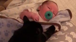 Black cat next to baby