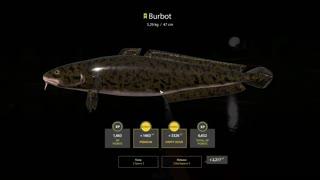 Russian Fishing 4 Sura River Burbot 3.29 Kg