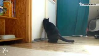 Cats Opening Fridges