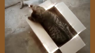 Funny real cat