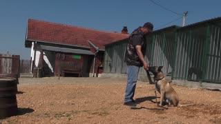 Training your Belgian Shepard dog
