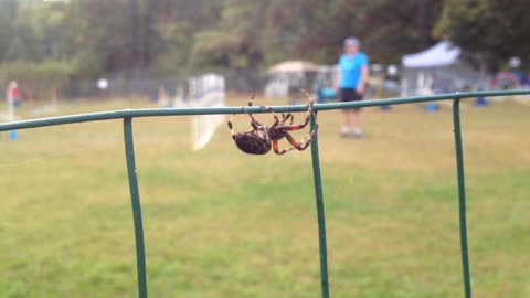 Spider is Inspired by Dog Agility