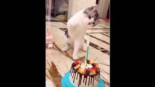 Cat blows the cake