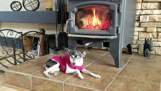 Old dog relaxing by the fireplace