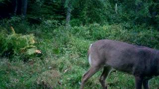 Huge PA 8 Point Buck