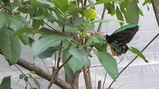 Slow motion butterfly