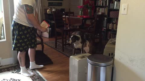 Boxer annoyed by singing Valentine's Day card