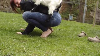 Photobombing Chicken Interrupts Goat Yoga