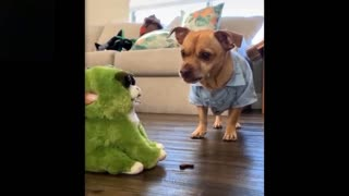 Funny Pets Being Cute And Crazy
