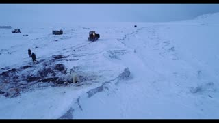 Keeping Polar Bears From Coming Close