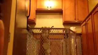 Dog jumping and getting out of its cage