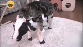Funny Animal Videos Compilation 😹 Try Not To Laugh