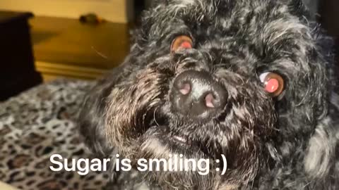 The Smiling Dog