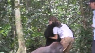 Baby Gorillas warming heart
