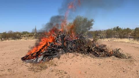 Burning cholla