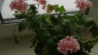 Beautiful flowers at home.