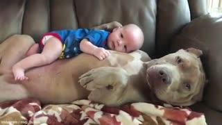 Babies sleeping with pitbull!!!!
