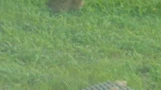 Cool baby rabbit