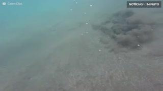Vídeo mostra arraia desaparecendo no fundo do mar