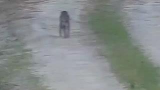2020 bobcat sighting
