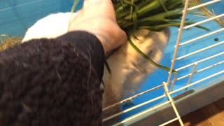 rabbit having large snack