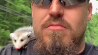 Opossum Rides Motorcycle