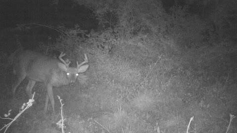 Beautiful PA 8 Point Buck