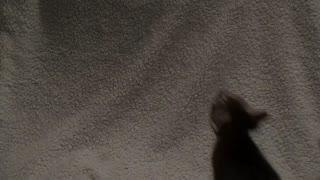 Lila Cat - Jump Training II