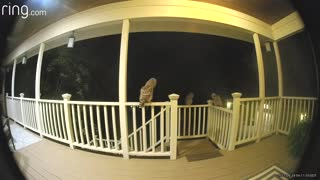 Michigan Family Catches Visiting Owls On Their Porch With Ring Camera